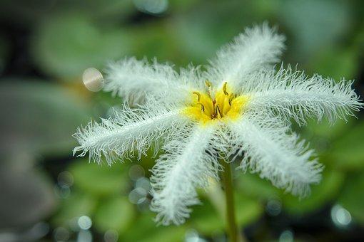 Blossom, Bloom, Filigree, Close Up, Tender, Slightly