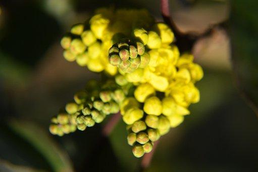 Flower, Yellow, Shrub, Winter, Season, Plants, Garden