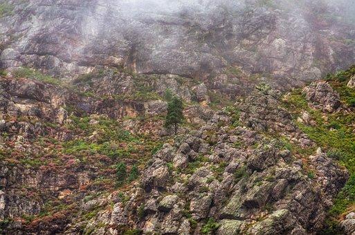 Tree, Mist, Mountain, Rocky, Fog, Landscape, Nature