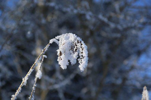 Winter, Ripe, Frozen, Frost, Cold, Wintry, Eiskristalle