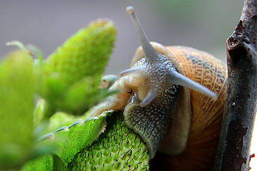 Macro, Snail, Green, Invertebrates, Mucus, Strawberry