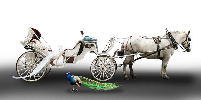 Transport, Traffic, Coach, Horses, White Carriage
