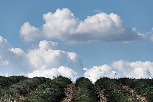 Uphill, Lavender, Clouds, Blue Sky, Landscape