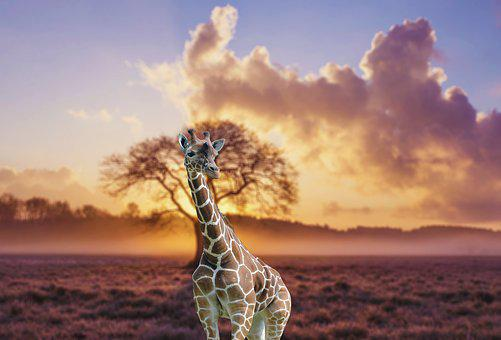Giraffe, Jungle, Animal, Zoo, Africa, Lion, Safari