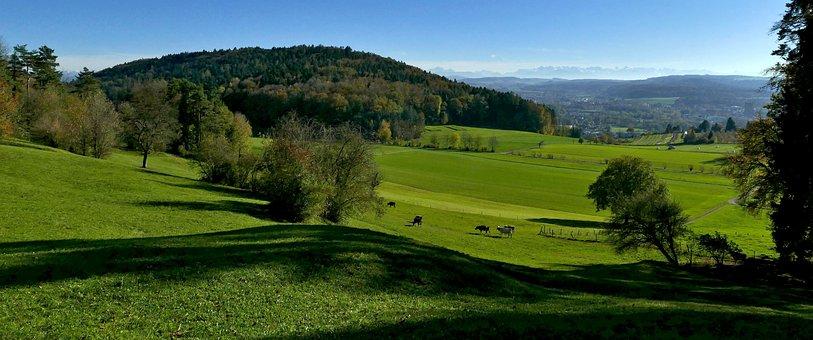 Landscape, Agriculture, Nature, Pasture, Meadow, Cows