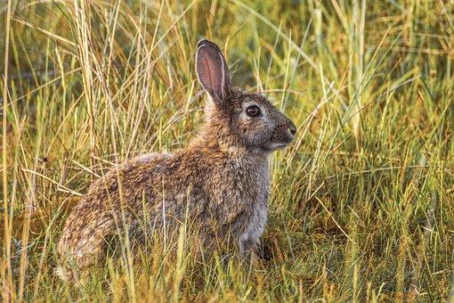 Rabbit, Nature, Hare, Ears, Sit, Animal World, Cute