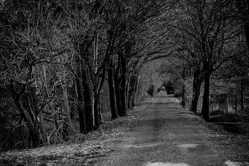 Forest, S W, Nature, Landscape, Tree, Rest, Secret
