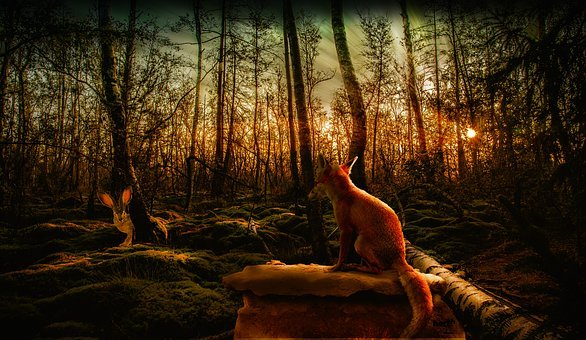 Hare, Fuchs, Forest, Nature, Sunset, Mystical
