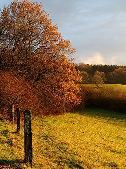 Autumn, Tree, Nature, Leaves, Sunset, Fall Foliage