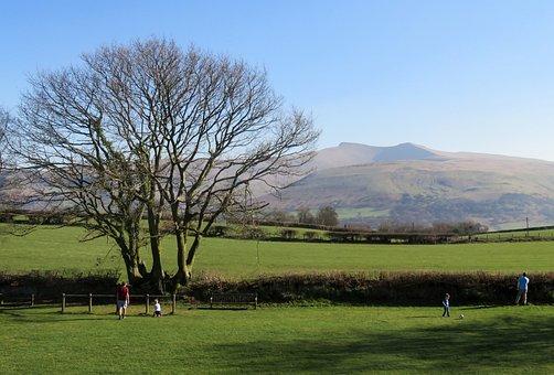 Wales, Nature, Uk, Brecon, Beacons, Libanus, Tree