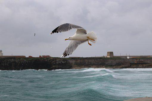 Sea, Bird, Rocks, The Seagull, Wings, Waves, Feather