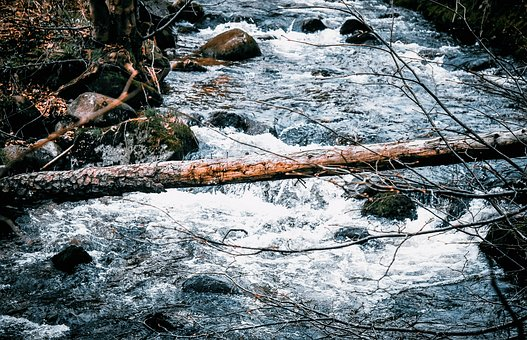 Log, Tree, Nature, Wood, Trunk, Water, River, The Brook