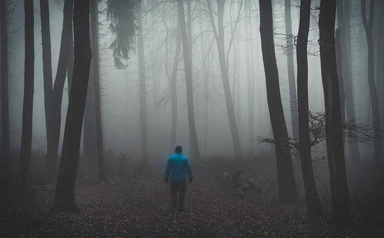 Forest, Fog, Nature, Trees, Landscape, Secret, Autumn