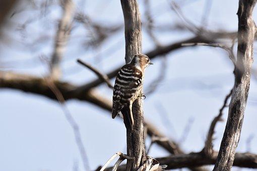 Animal, Wood, Branch, Bird, Wild Birds, Woodpecker