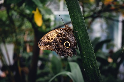 Brown, Butterfly, Nature, Insect, Animal, Green