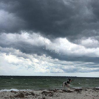 Storm, Dog On The Beach, Clouds, Gulf Of Mexico, Sky