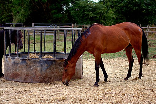 Horses, Field, Mammal, Hay, Trees, Parched Ground, Day