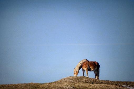 Horse, Pasture, Hill, Snow, Nature, Landscape, Grass