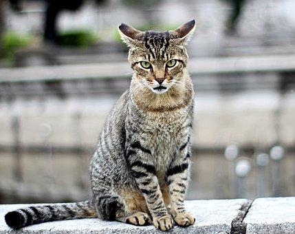 Cat, Kitten, Beautiful, Animal, Feline, Beauty, Look