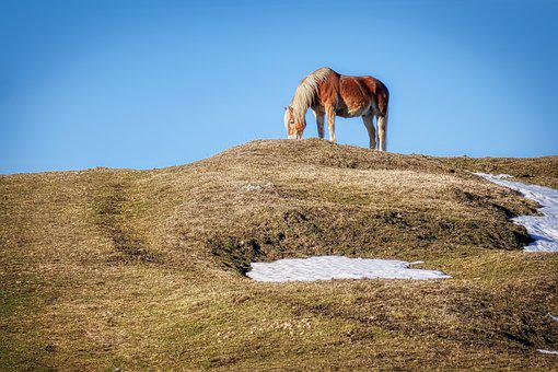 Horse, Pasture, Hill, Snow, Nature, Landscape, Grass