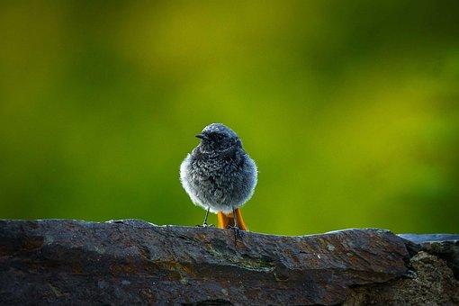 Bird, Wild, Nature, Animal, Animal World, Bill, Feather