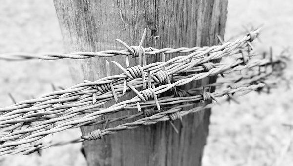 Barbed Wire, Fence, Security, Limit, Barrier, Pointed