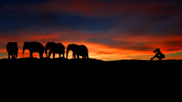 Sunset, Elephants, Photographer, Nature, Silhouette