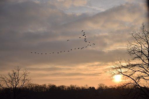 Nature, Sun, Sunset, Birds, Afternoon, Landscape, Night