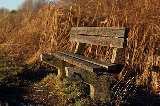 Bank, Bench, Seat, Wooden Bench, Wood, Nature, Walk