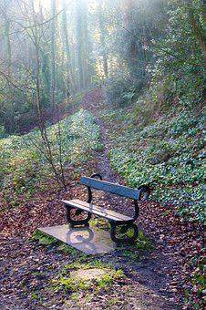 Bench, Wood, Rest, Seat, Nature, Forest, Autumn