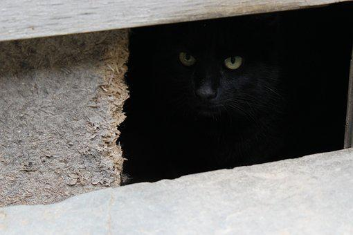 Cat, Black Cat, Cat Eyes, Animal, Kitten, Hiding
