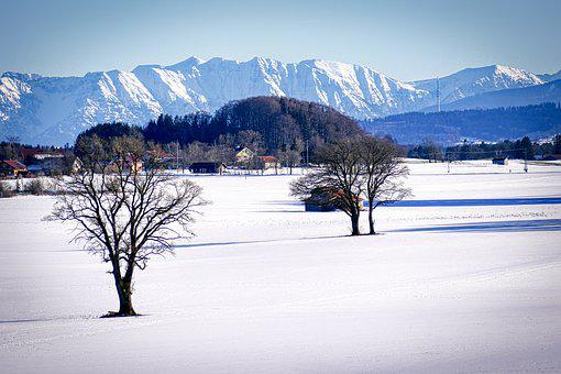 Winter, Snow, Tree, Landscape, Cold, Nature, Wintry