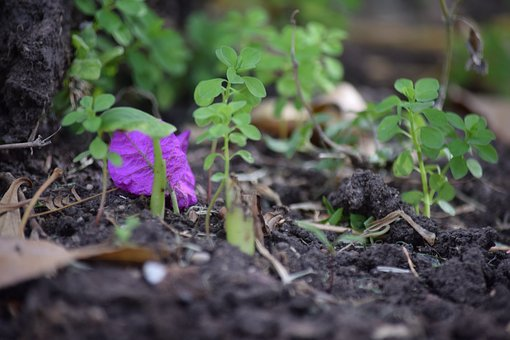 Flower, Miniature, Green, Purple, Trim, Colorful, Small