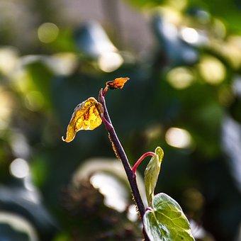 Foliage, Bud, Plant, Sunlight, Illuminated, Nature