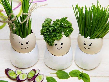 Eggshell, Egg Cups, Herbs, Hairstyle, Hair, Easter