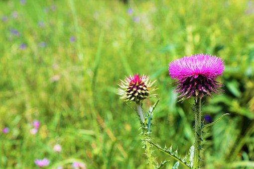Flower, Spring, Dea, Plant, Nature, Color, Beautiful