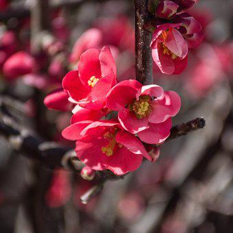 Pink, Flowers, Bloom, Nature, Spring, Floral, Bouquet