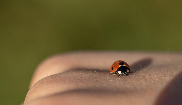 Ladybug, Spring, Nature, Insect, Flower, Plant, Beetle