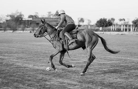 Polo, Playing, Sport, Play, Ball, Training, Summer
