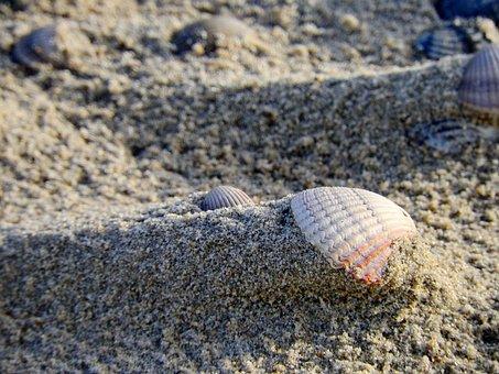 Shell, Sand, Beach, Sea, Ocean, Seashell, Public Record