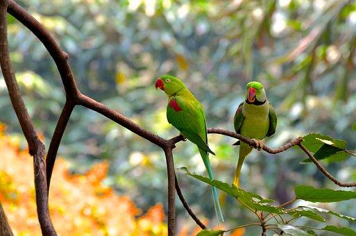 Birds, Rainforest, Bird, Tropical, Animal World