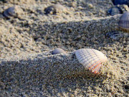 Shell, Sand, Beach, Sea, Ocean, Seashell, Public Record