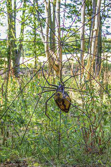 Spider, Art, Installation, Metal, Web, Legs, Outdoors