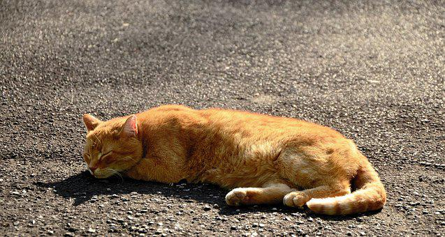 Cat, Sleep, Pet, Animal, Domestic Cat, Lazy, Fur, Mieze