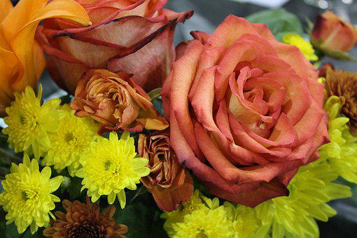 Flower, Rose, Yellow, Pink, Bloom, Blossom