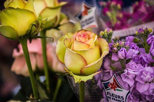 Flowers, Flora, Floral, Bloom, Blossom, Spring, Petals