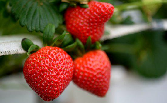 Strawberry, Strawberries, Fruit, Food, Red, Sweet