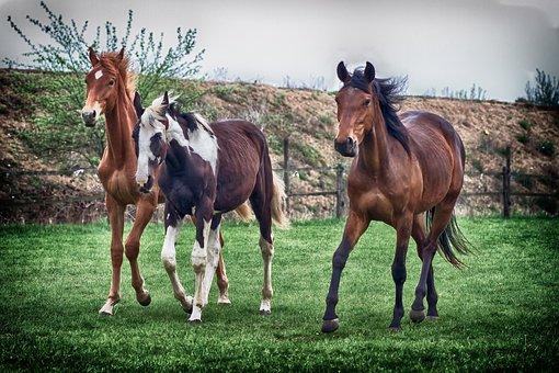 Horses, Pasture, Animal, Graze, Horse Head, Mammal