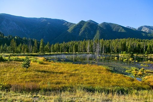 Madison River Scenery, Montana, River, Forest, Nature