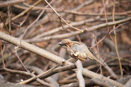 Sparrow, Bird, Nature, Animal, Urban Birds, Urban Life